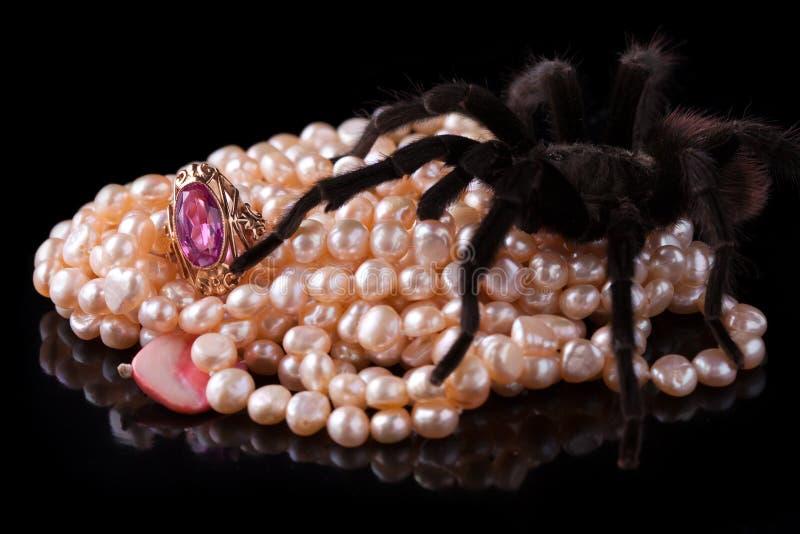 pająka skarb zdjęcie royalty free