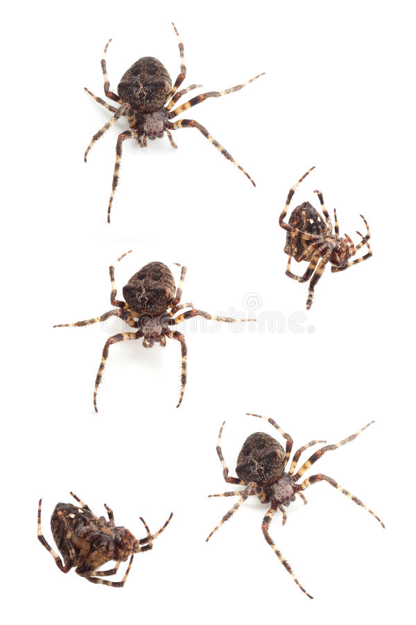 pająki obrazy royalty free