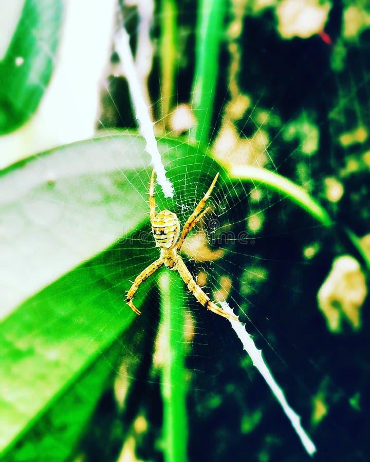 pająki obraz royalty free