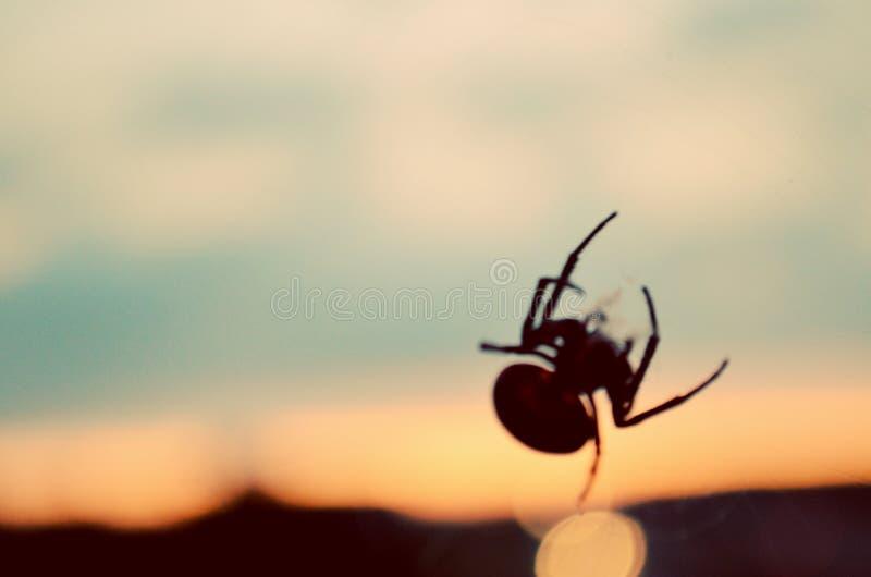 pająki zdjęcia stock