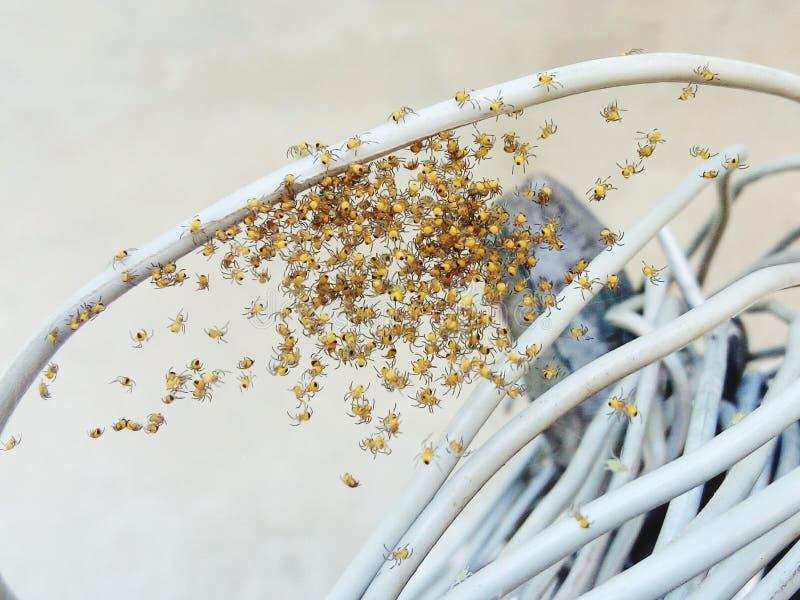 pająki zdjęcia royalty free