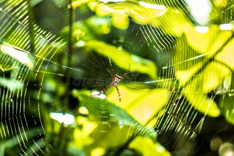 Pajęczyna budująca pajęczynę fotografia royalty free