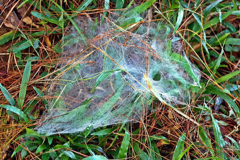 Pajęczyna na trawie obraz stock