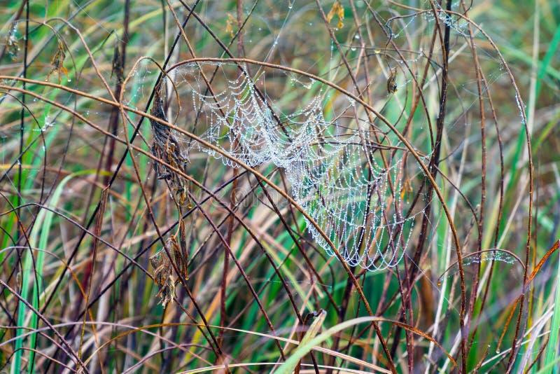 Pajęczyny na mokrej trawie zdjęcie royalty free