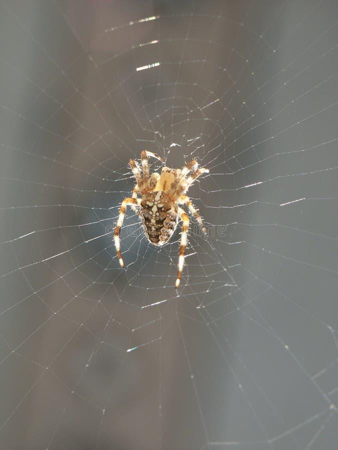 Download Pająk obraz stock. Obraz złożonej z pajęczyna, rezygnuje - 49623