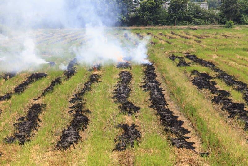 Paja ardiente del arroz del fuego imagen de archivo