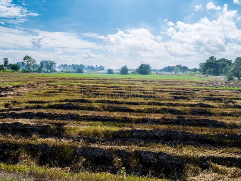 Paja ardiente en causa de la plantación una del arroz al calentamiento del planeta fotos de archivo libres de regalías