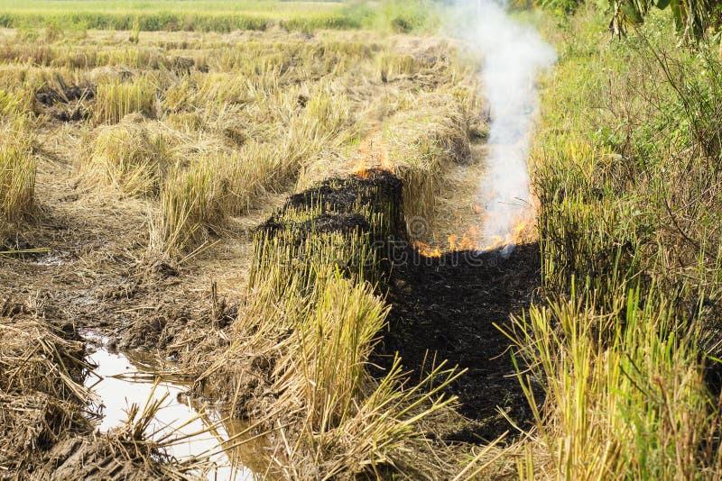 Paja ardiente en la plantación una del arroz de la causa al calentamiento del planeta imágenes de archivo libres de regalías
