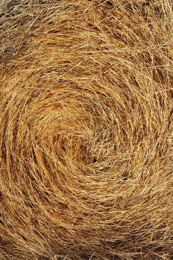 Paja, paja seca, fondo del amarillo de la paja del heno, textura de la paja del heno imagenes de archivo