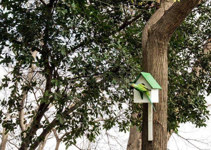 Pajarera de madera en un árbol en un parque con el loro fotos de archivo libres de regalías