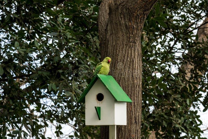 Pajarera de madera, nidal en un árbol con el loro imágenes de archivo libres de regalías