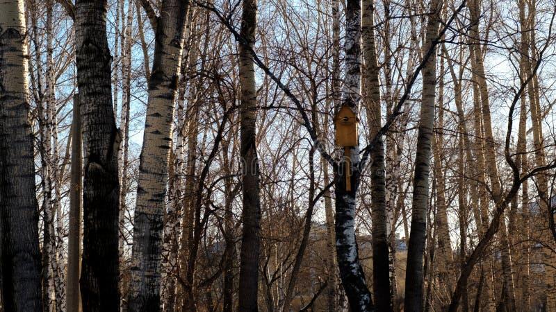 Pajarera en bosque del invierno imagen de archivo libre de regalías