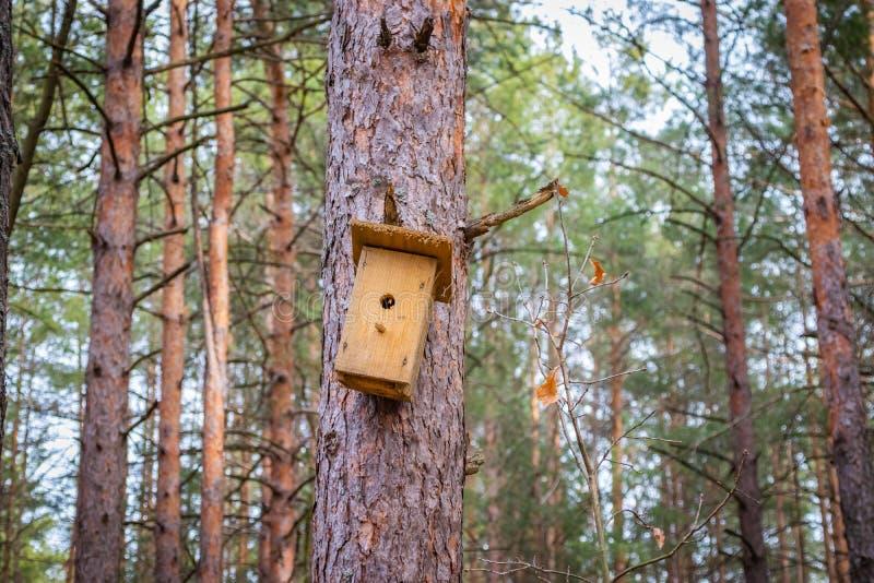 Pajarera en el árbol que espera los estorninos, en la primavera en el bosque imagenes de archivo