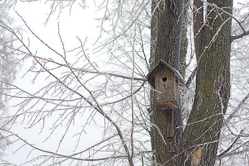 Pajarera vieja en un árbol en invierno foto de archivo