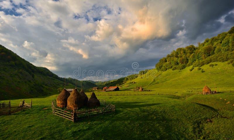 Pajares en las montañas rumanas foto de archivo libre de regalías