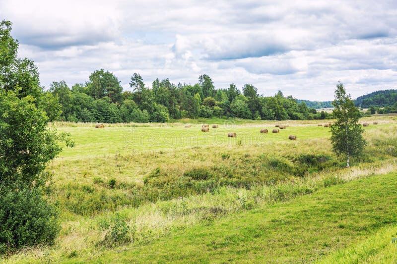 Pajares y campo verde en el borde de la naturaleza hermosa del bosque fotos de archivo libres de regalías