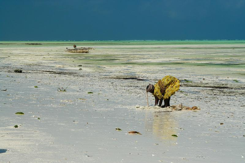 PAJE, ZANZIBAR - DECEMBER 17. 2007: African woman in traditional yellow clothes searching crabs and sea shells in white sand with royalty free stock photo