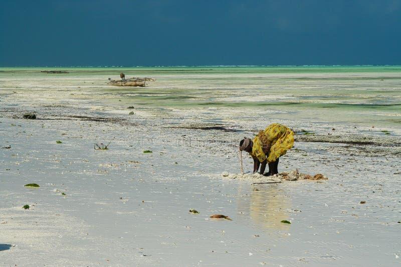 PAJE ZANZIBAR - DECEMBER 17 2007: Afrikansk kvinna i traditionell gul kläder som söker krabbor och havsskal i vit sand med royaltyfri foto