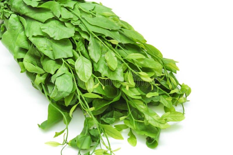 Pak-WAN Boom, Thaise groente royalty-vrije stock fotografie