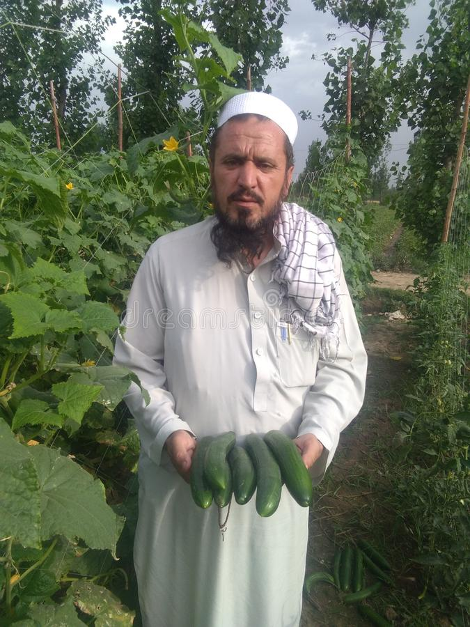 PAKISTAN farmer royalty free stock photo