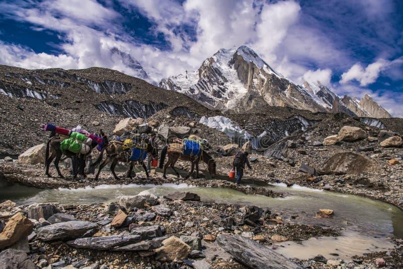 Pakistan Karakoram K2 som trekking fotografering för bildbyråer