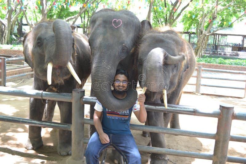 A cute Pakistani Boy Irfan sitting between elephants in Samphran Elephant Ground & Zoo royalty free stock photos