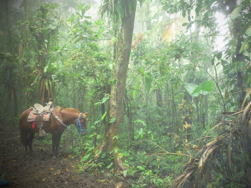 Pakpaard in de mist van een Ecuatoriaans wolk-bos stock afbeelding
