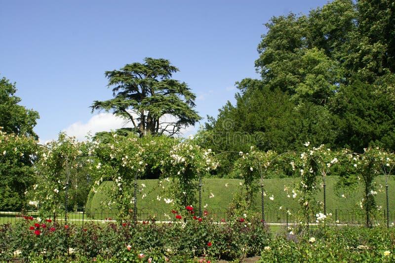 Palácio de Blenheim. Jardim de rosas. imagens de stock royalty free