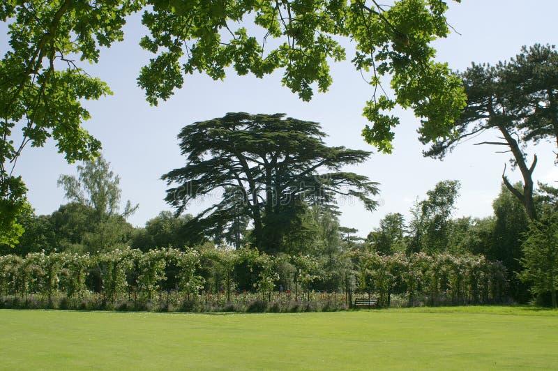 Palácio de Blenheim. Jardim de rosas. imagem de stock royalty free