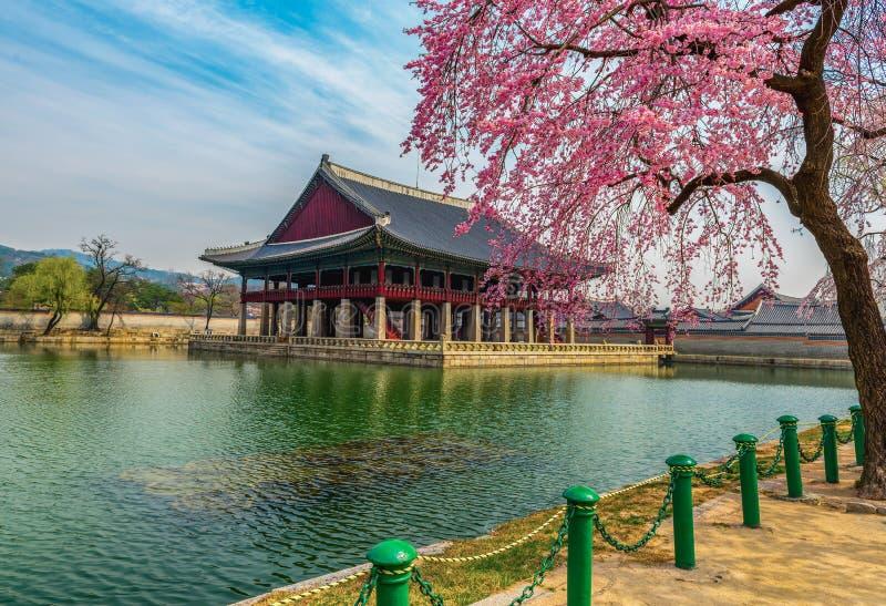 Palácio de Gyeongbokgung com flor de cerejeira fotografia de stock royalty free