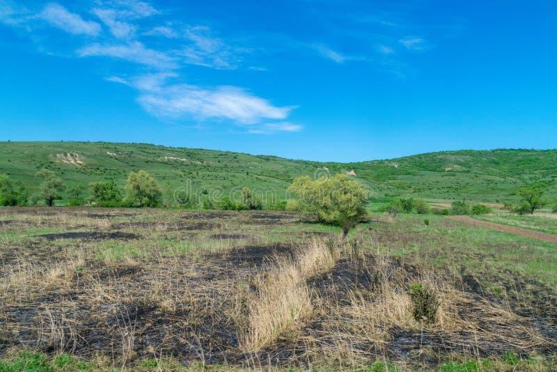 Palący pole na słonecznym dniu z niebieskim niebem zdjęcia stock