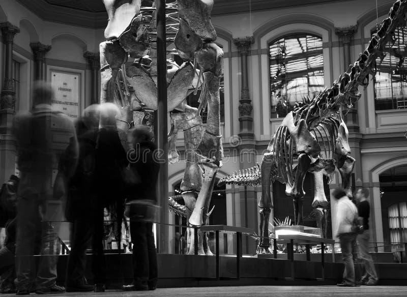 Paläontologisches Museum in Berlin lizenzfreie stockbilder