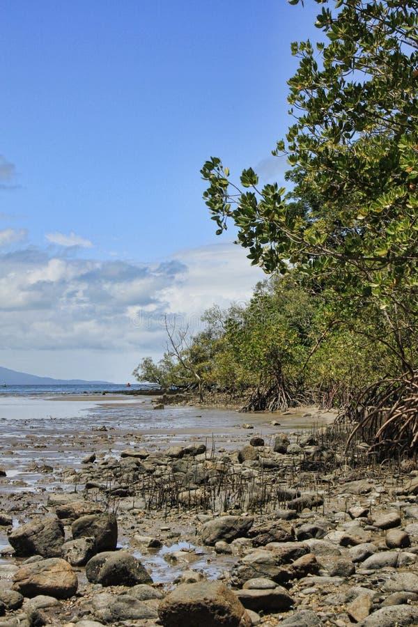 Palétuviers 8532 de Port Douglas photographie stock libre de droits
