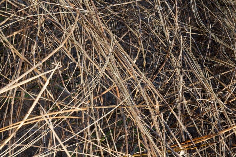 Paląca trawa w polu na tle i teksturze zdjęcie royalty free