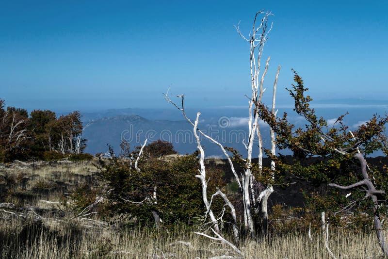 Palący badyle drzewa opuszczali na lawie po Etna wulkanu erupci obrazy royalty free
