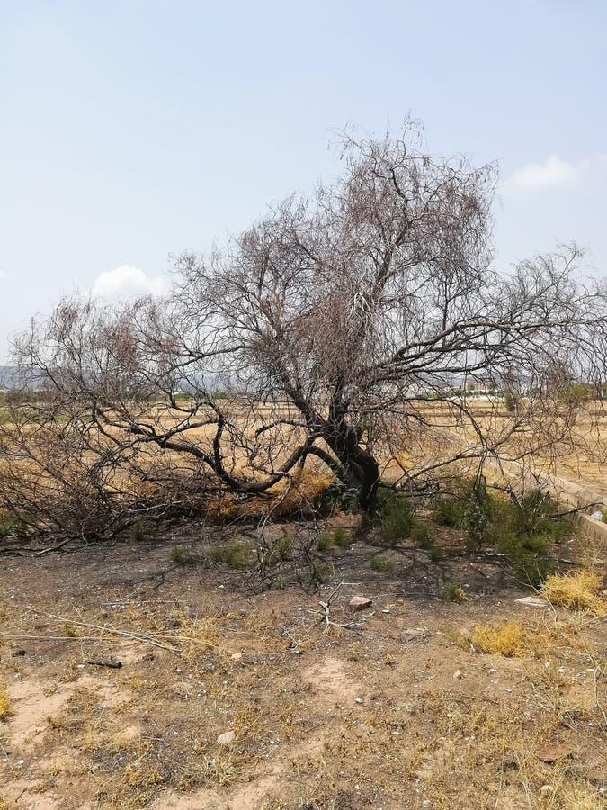 Palący drzewo na miejscu z jakaś roślinnością z trudem obrazy stock