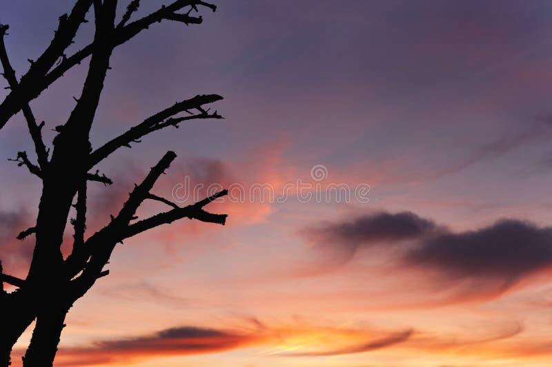 Palący drzewo w wsi obraz stock