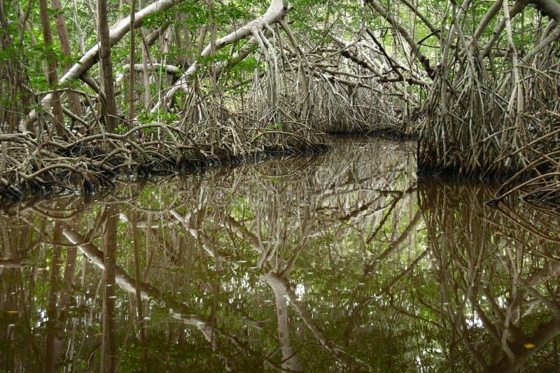 Pal?tuviers dans Progreso photo libre de droits