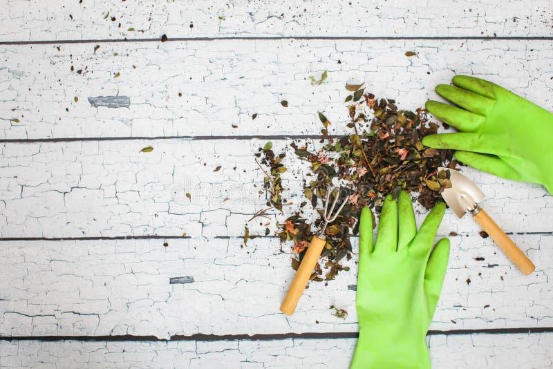Pala de mano verde de goma de los guantes de la seguridad y rastrillo que cultiva un huerto en concepto de la agricultura del tab fotografía de archivo libre de regalías