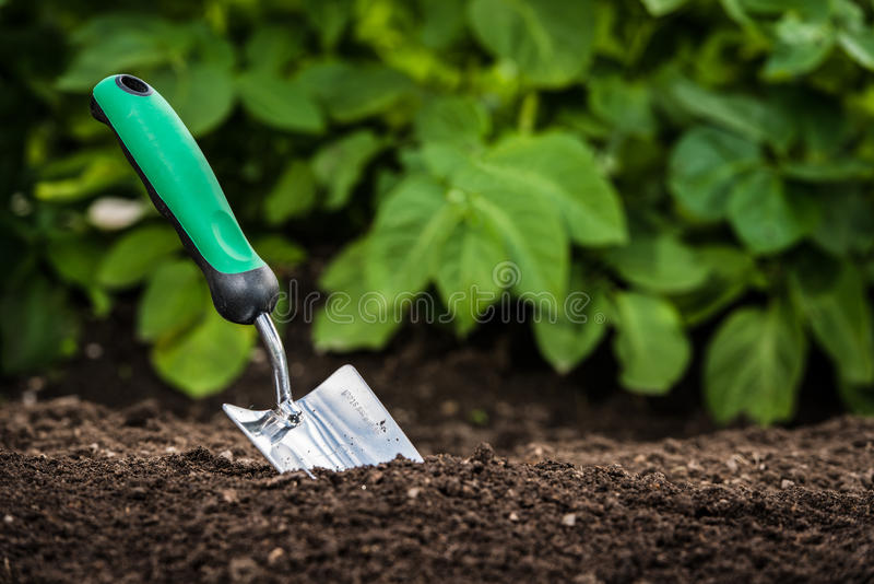 Pala que cultiva un huerto en el suelo fotos de archivo