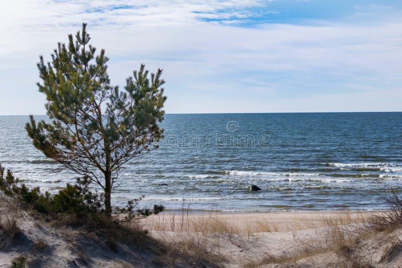 Palanga Baltic coast beach in winter stock image