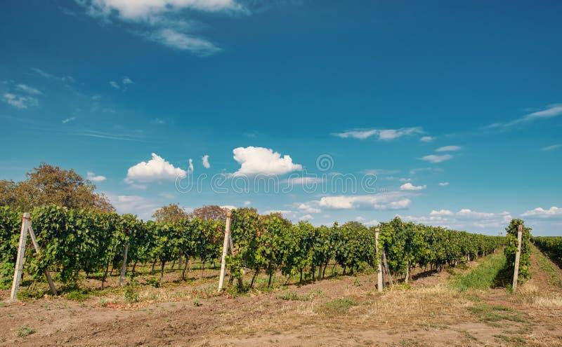 Palava winnicy Południowy Moravia republika czech fotografia royalty free