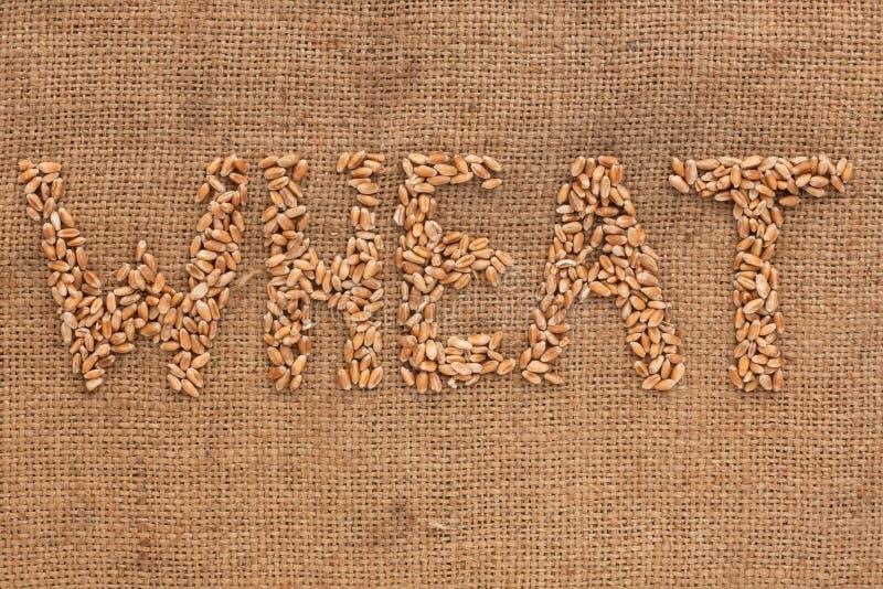 Palavra do trigo escrita no pano de saco imagens de stock