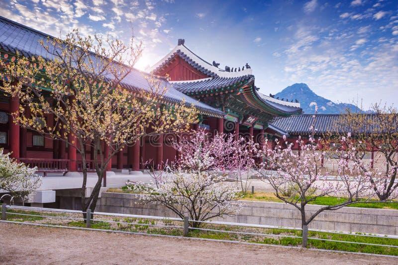 Palazzo di Gyeongbokgung in primavera, Corea del Sud fotografia stock libera da diritti
