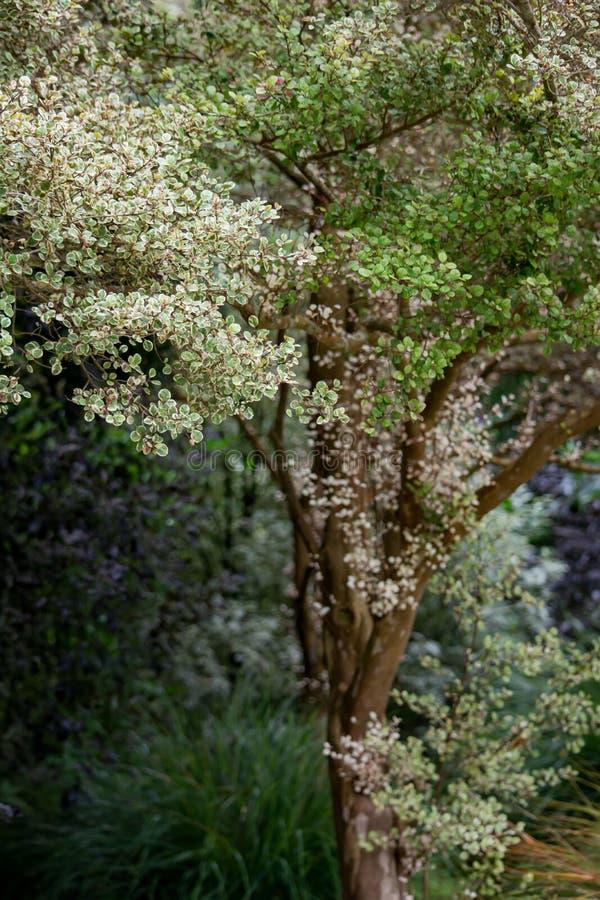 Pale Leaves auf den empfindlichen Niederlassungen, die 2 landschaftlich gestalten stockfotografie