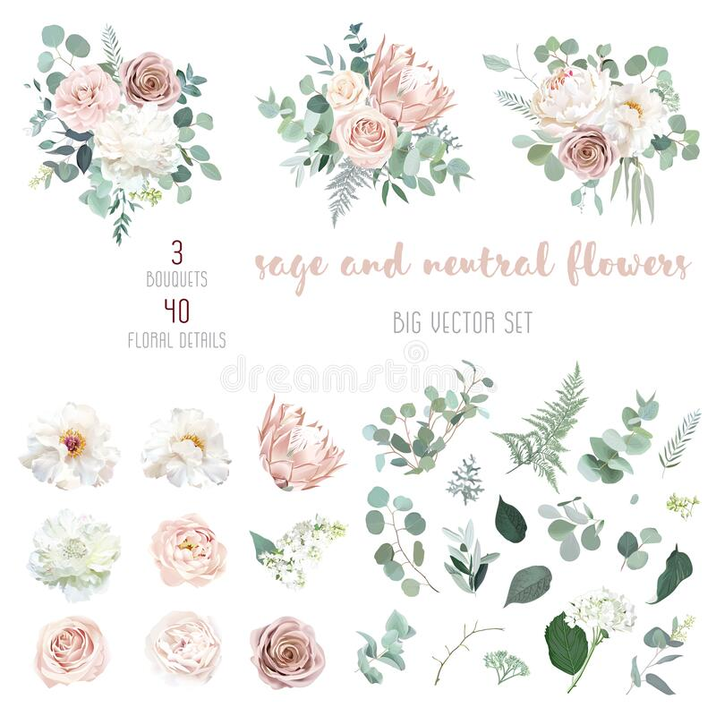 Free Pale Pink Camellia, Dusty Rose, Ivory White Peony, Blush Protea Royalty Free Stock Images - 197264069