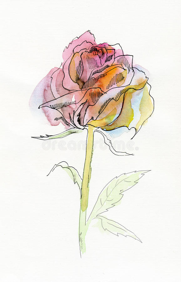 Pale pink rose. royalty free illustration