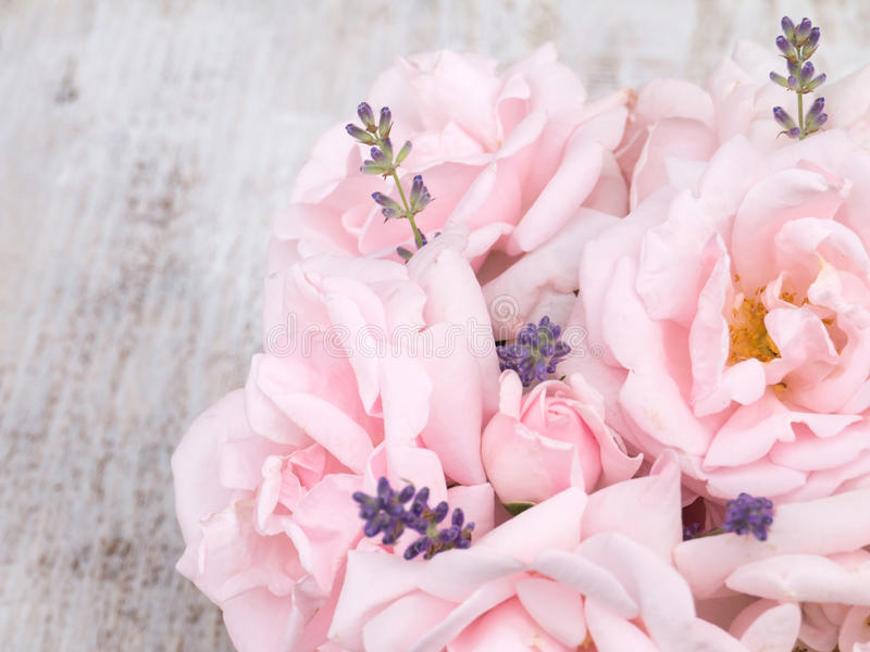 Pale pink roses and lavender bouquet on the white background. Pale pink roses and lavender bouquet on the white painted rustic background stock photos