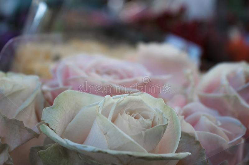 Pale pink roses in a street shop. Romantic concept. stock images