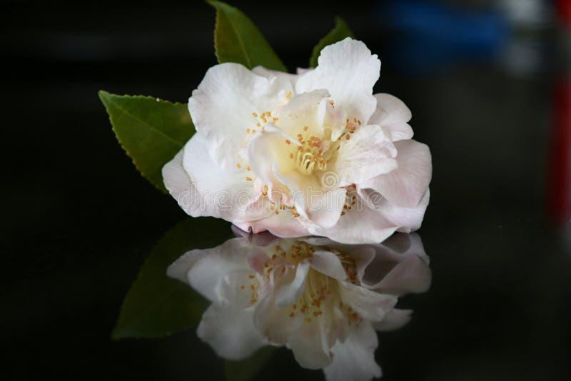Pale Pink Spring Delight Free Public Domain Cc0 Image